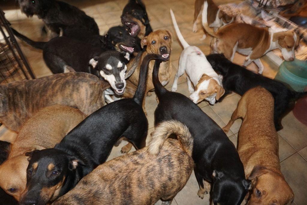 Acogió 97 perros en su casa para protegerlos del Huracán Dorian