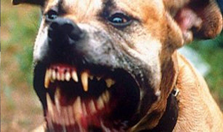 Una menor fue atacada por una jauría de perros — Mar del Plata
