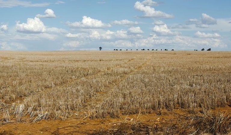 Preocupación en Córdoba por la sequía que reducirá la cosecha de soja